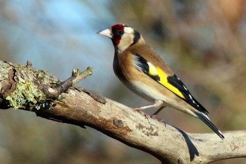 Vogels op een tak