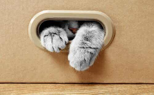 Waarom zijn katten dol op kartonnen dozen?
