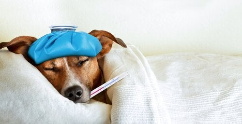Zieke hond in bed met thermometer