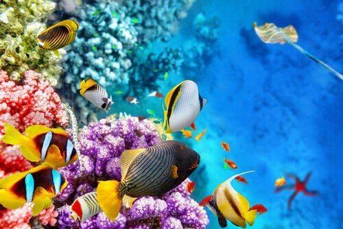De fauna van het Great Barrier Reef in Oceanië