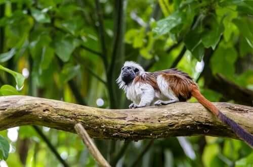 Klein aapje in een boom