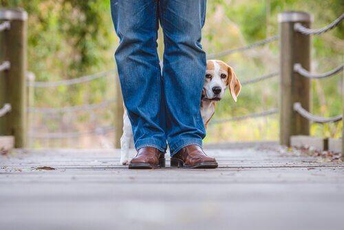 Een bange hond verstopt zich achter zijn baas