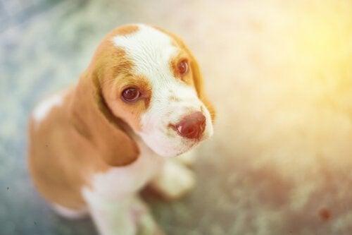 zielig ogende pup