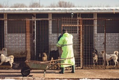 vrijwilliger maakt dierenverblijf schoon