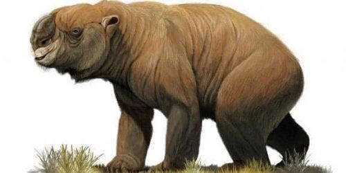 De uitgestorven megafauna van Australië