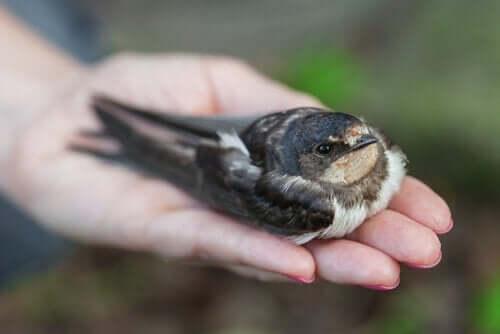 Hoe kun je weten of een vogel ziek is?
