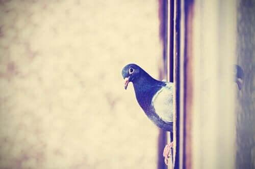 Een duif die op een raam zit