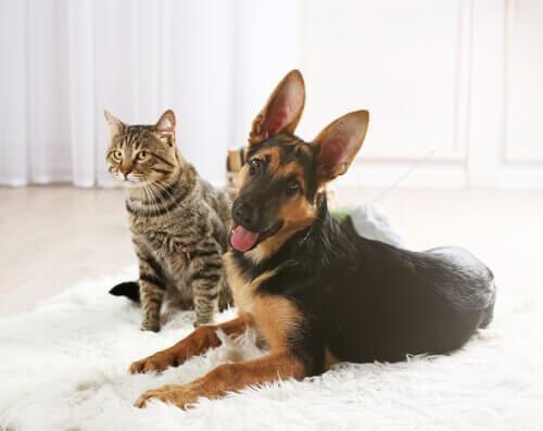 Een kat en een hond liggen op een kleed
