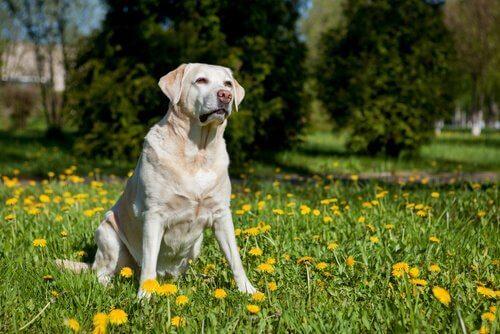 Hond die in het gras zit