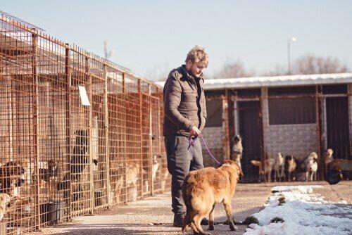 vrijwilliger laat hond uit