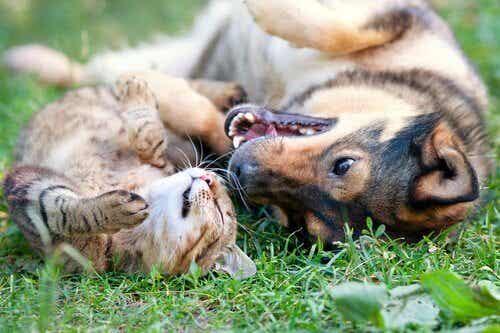 Vier redenen om je huisdier te laten steriliseren