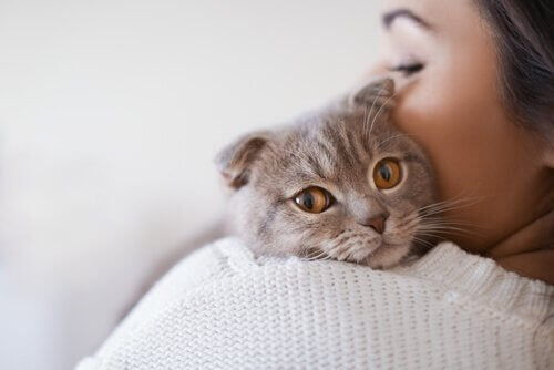 kat in de hals van zijn baasje