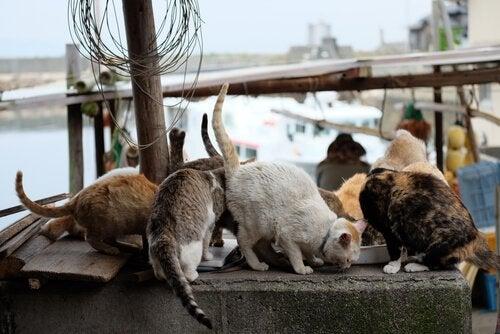 Veel katten die samen eten