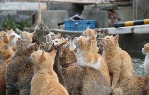 Katteneilanden in Japan