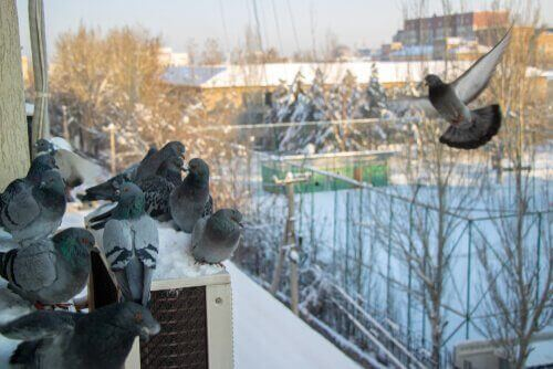 7 manieren om duiven af te schrikken