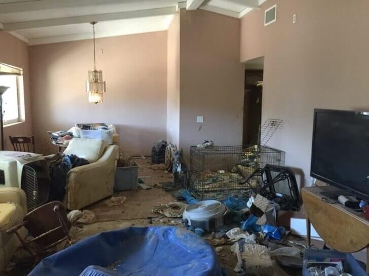 Het huis waaruit de pitbulls gered zijn