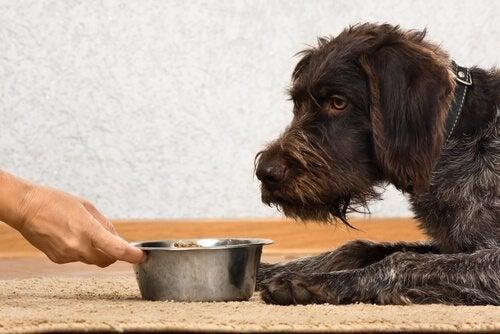 Hond bij zijn voerbak