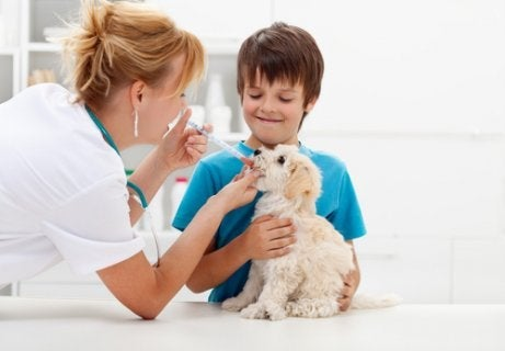 Een dierenarts die medicijnen geeft aan een hond