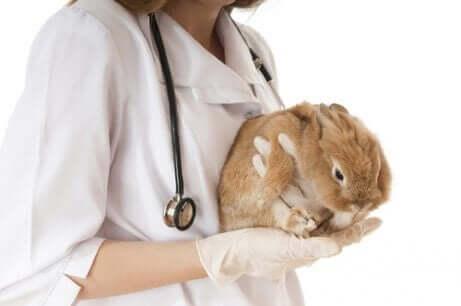 Een dierenarts die een konijn vasthoudt