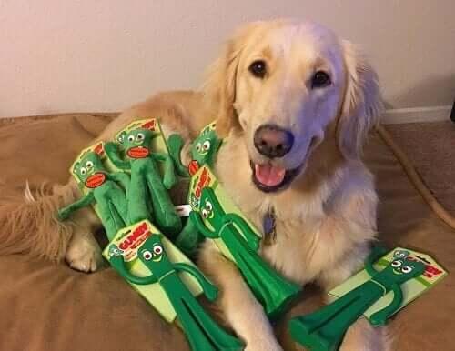 Hond reageert op baasje vermomd als favoriete speeltje