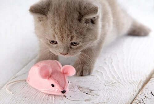 Kitten speelt met speelgoedmuis