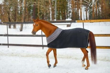 Er moeten specifieke voorzorgsmaatregelen voor je paard in de winter worden genomen
