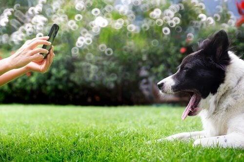 gapende hond wordt op de foto gezet