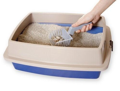 iemand maakt de kattenbak schoon