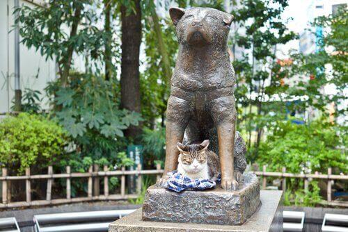 4 honden die in de voetsporen van Hachiko traden