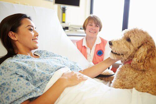 Therapiehond met een ziekenhuispatiënt