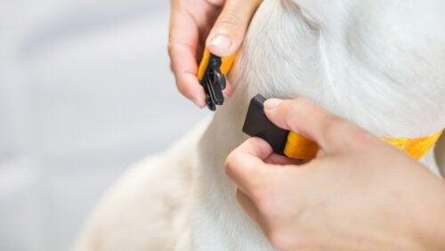 Een hond met een anti-blafband om zijn nek