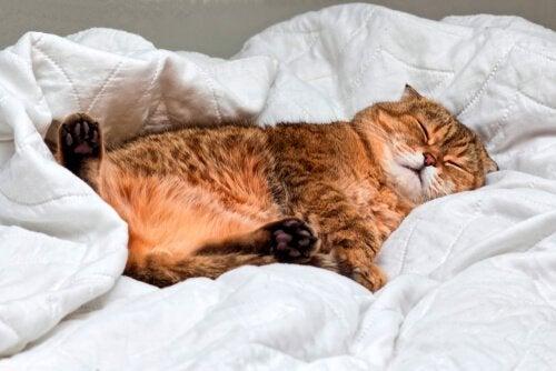Kat ligt op een deken te slapen