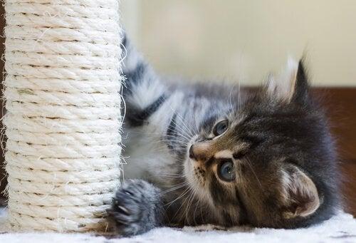 Kitten speelt met krabpaal
