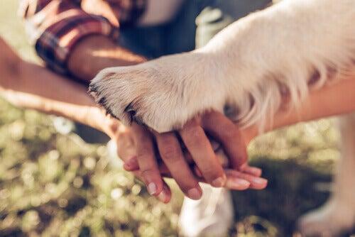 Hondenpoot op mensenhanden