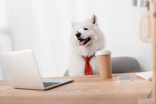 Dieren en marketing: wat zijn merkmascottes?