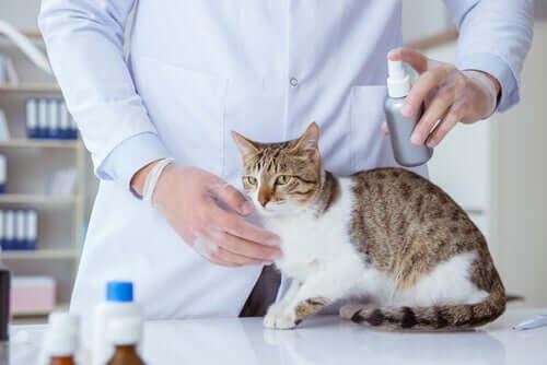 Arts spuit vlooienmiddel op kat