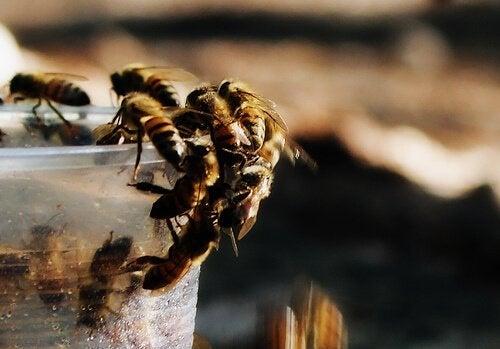 Bijen drinken uit een bekertje