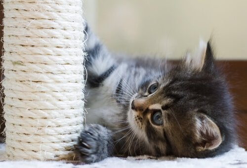 Een kitten speelt met een krabpaal