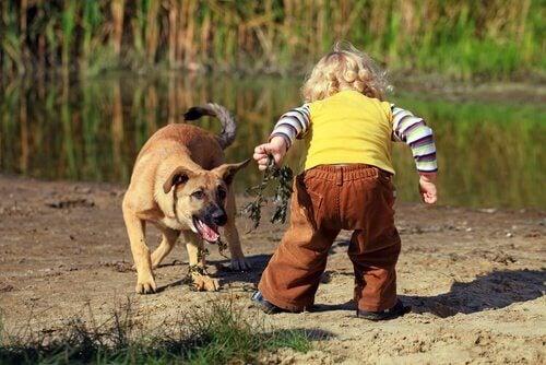Een kind speelt met een hond