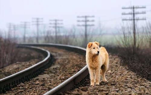 Overwegingen bij het redden van een kat of hond