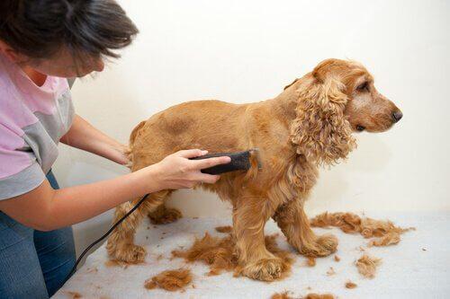 Een hond bij de hondentrimmer