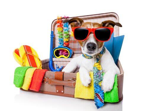 Een kleine hond in een koffer