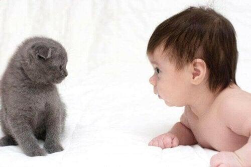 Een interessante vraag: zijn katten goed met baby's?
