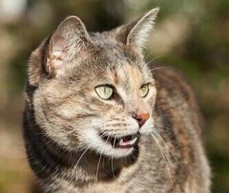 Een kat met haar mond open