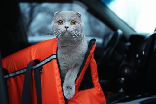 Een kat in een reismand