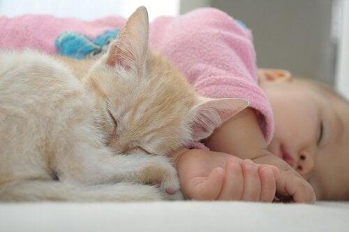 Een kitten slaapt met een baby
