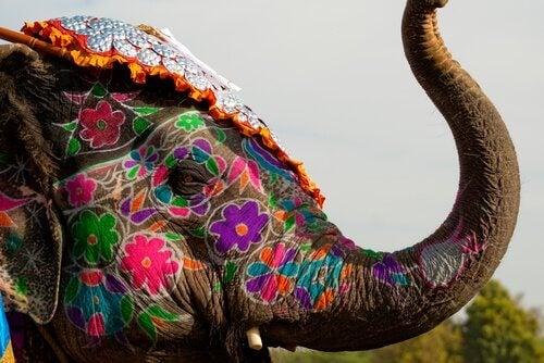 Vijf heilige dieren uit de hele wereld