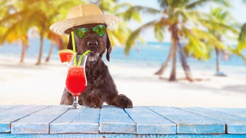 Hond aan het strand met een cocktail