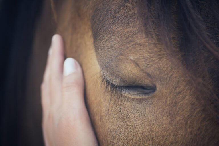 Iemand aait een paard