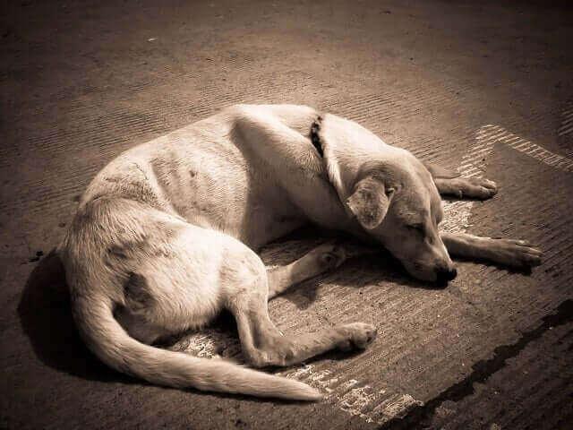 Hond ligt ziek op de grond
